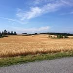 Et typisk blik på det midtsjælandske landskab